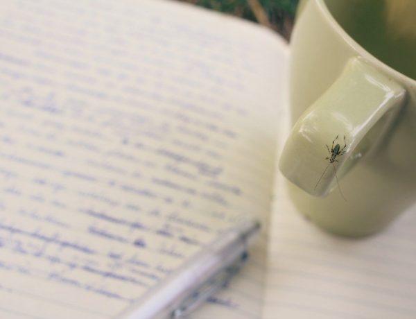 didie schrijven
