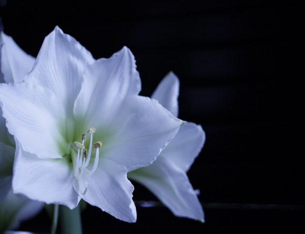bloemen fotografie