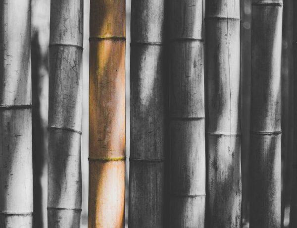 duurzame bamboe